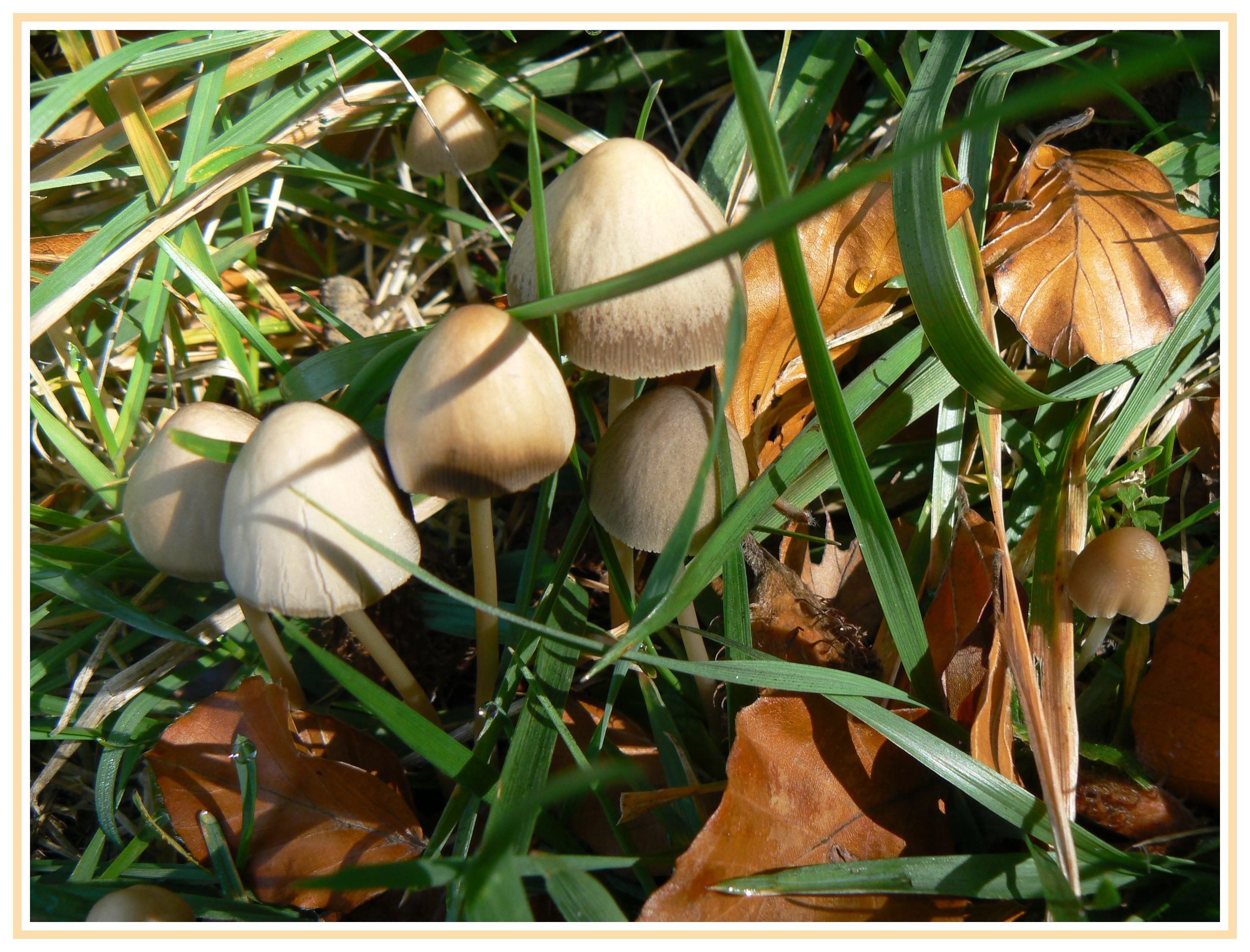 champignons142.jpg